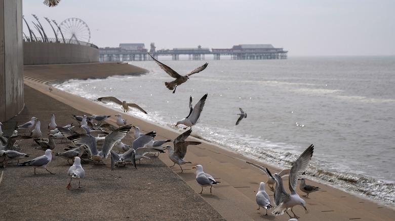 A flock of seagulls at beach