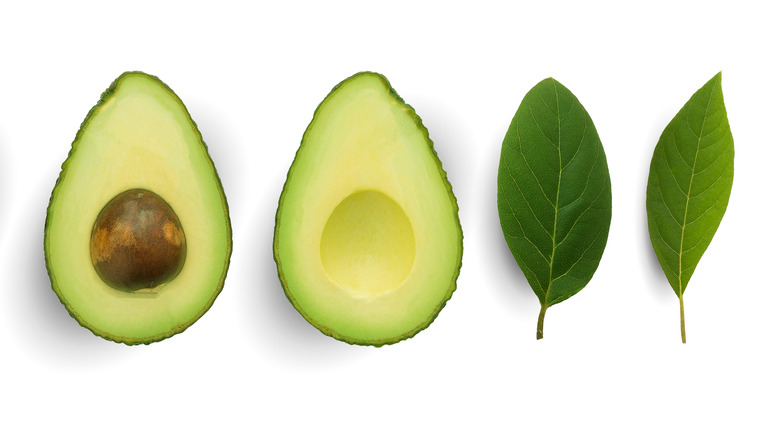 Halved avocados with leaves