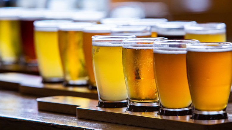 Small pours of beer in tasting glasses on wood blocks