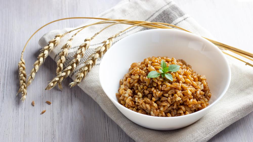 Cooked farro grains in white bowl