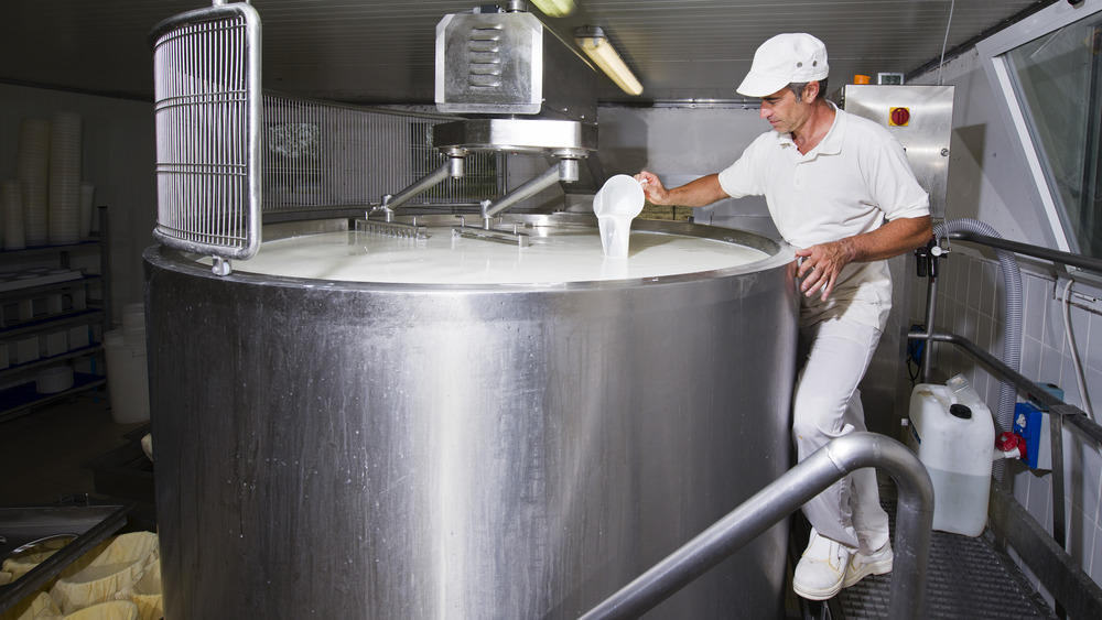 Cheese maker pours rennet into a steel tub