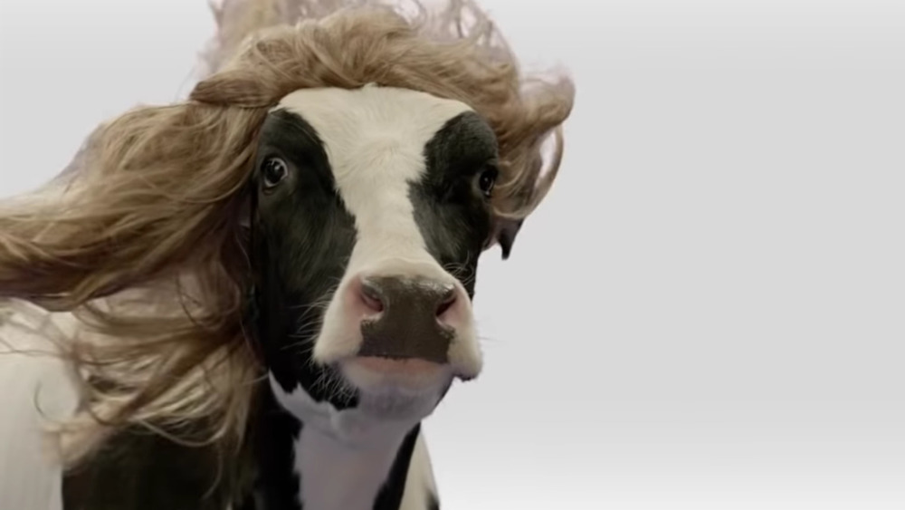 Chick-fil-A cow wig commercial