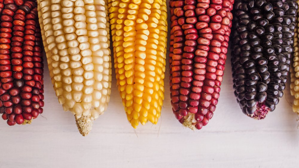 the difference between white and yellow corn