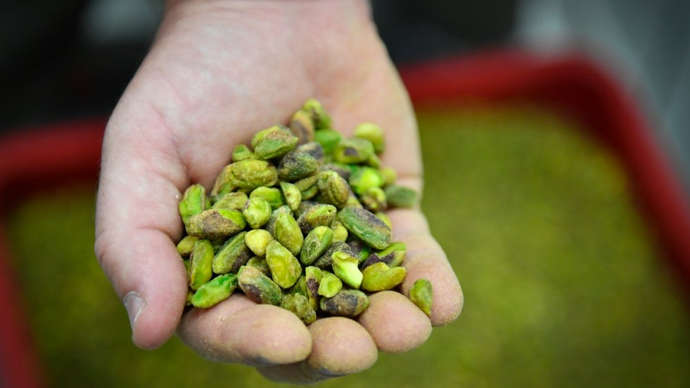 Hand holding shelled pistachios