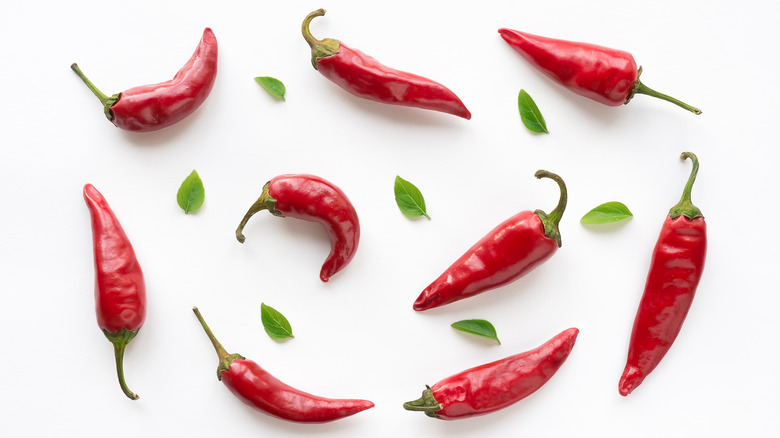 Chili peppers on white backdrop