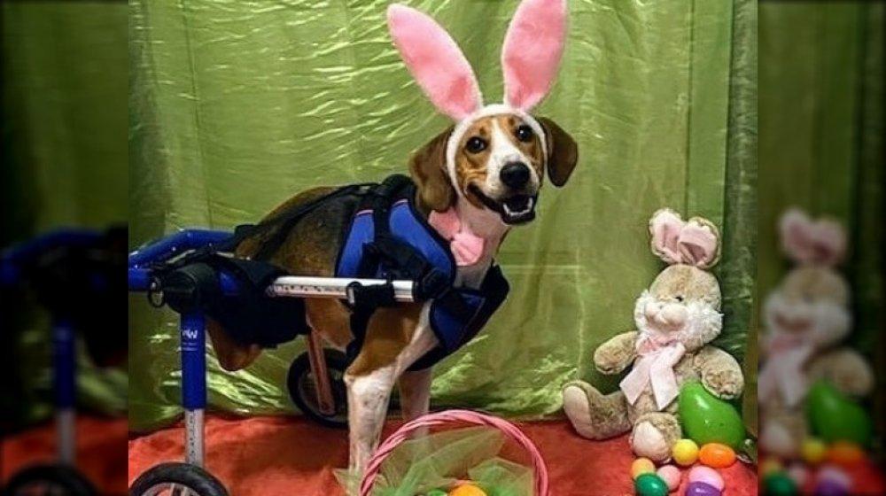 Lieutenant Dan as Easter Bunny