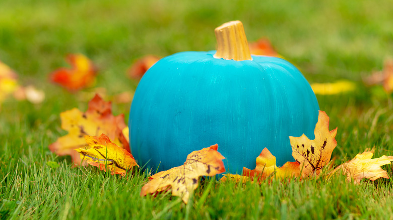 Teal pumpkin sitting amongst grass and leaves