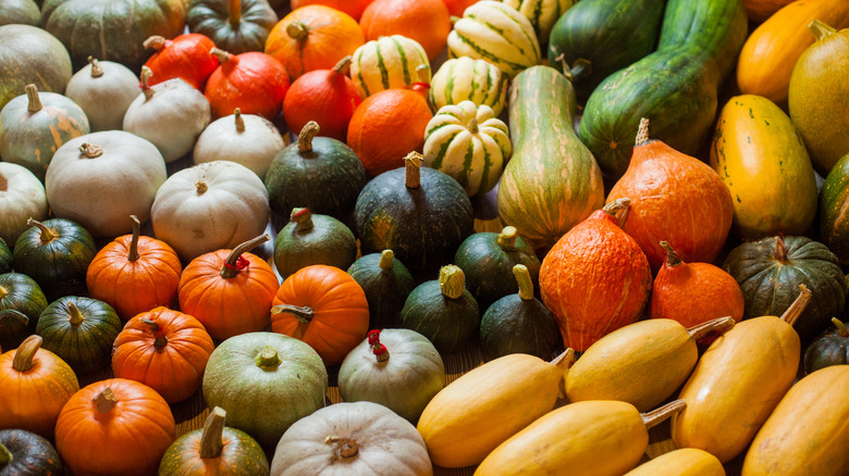 Colorful myriad of winter squashes