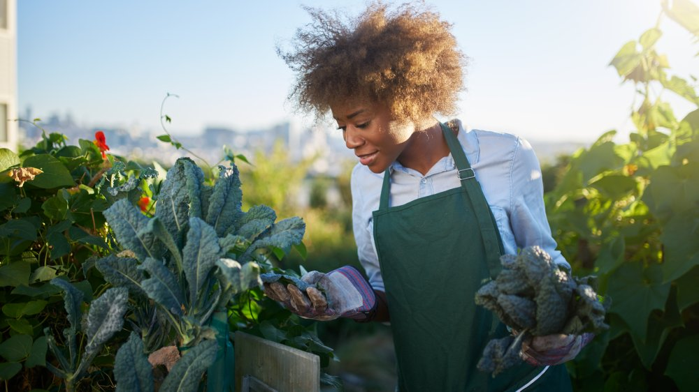 woman looking at kale in a garden