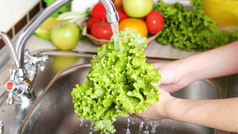 rinsing lettuce in sink